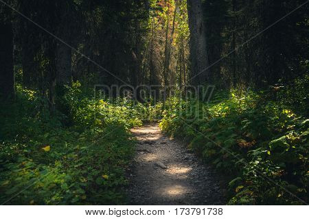 Image of a forest path dappled with sunlight.