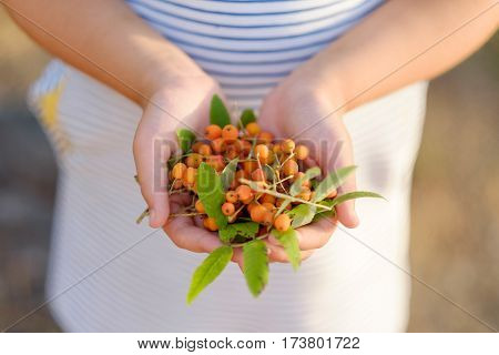 Girl Holding Mountain Ash Berries In Her Hands