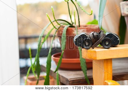 binoculars situated on shelf indoors next to the house plant