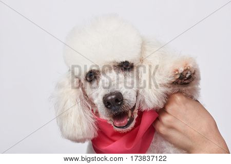 Holding Poodle Paw Up