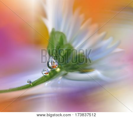 Abstract macro photo with water drops. Flower tranquil abstract closeup art background. Artistic Background for desktop. Pastel Flowers.