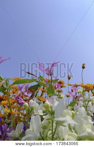 Wild Flower Fields