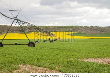 Meadow irrigated by lateral spray system on wheels. Landscape of green grass and yellow flowers in the province of Toledo (Spain)