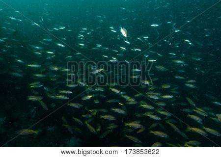 Marine Life Around Coral Reef At