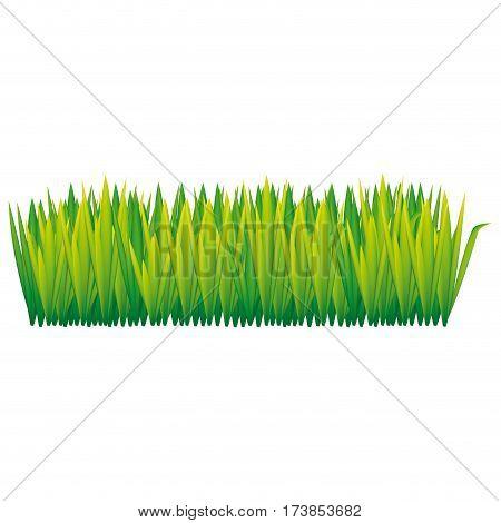 green tall grass icon, vector illustraction design image