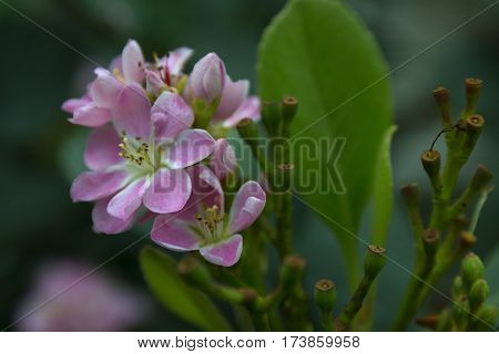 close up of gentle tinny pink flower surrounded by green leaves selective focus blurred green background soft focus