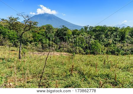 Rough grassland with saplings growing & woodland with Agua volcano in background in Escuintla, Guatemala, Central America