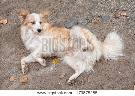 a dog lying on back is getting ready to be stroked his belly, Serbia