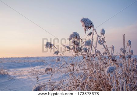 Winter landscape on the background of the rising sun. Reeds at dawn in the colors of the dawn.