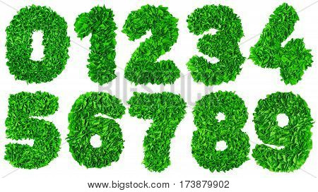 Handmade number set from green crepe paper isolated on white background. Set of numbers from scraps of paper