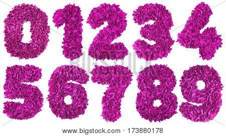 Handmade number set from magenta color crepe paper isolated on white background. Set of pink numbers from scraps of paper