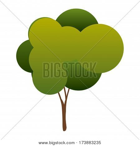 colorful silhouette tree with rounded crown leaves vector illustration