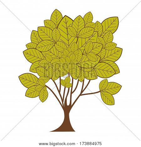 green leafy tree plant with ramifications vector illustration