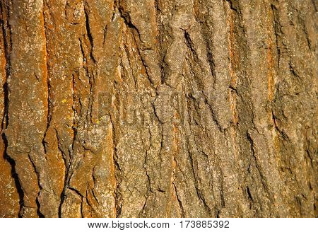 Tree bark texture. Wood background. Wooden pattern