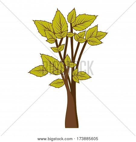 green leafy tree forest icon vector illustration