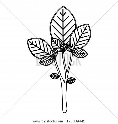 sketch silhouette large ramifications with oval leaves vector illustration