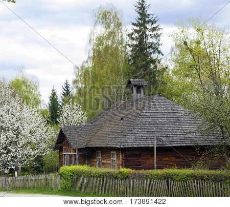 Old nice wooden house with wooden roof in village on spring warm day stands in shade near blossom trees in distance