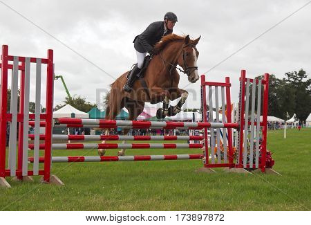 WEEDON, UK - AUGUST 27: A male show jumping competitor riding in one of the numerous horse jumping classes successfully clears the gate at the Bucks County show on August 27, 2015 in Weedon