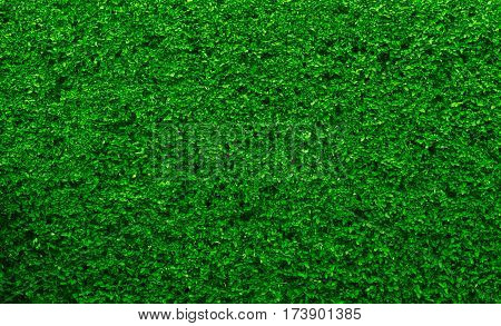green carpet abstract background, green color concept