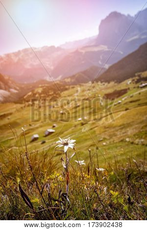 Seceda. Dolomites