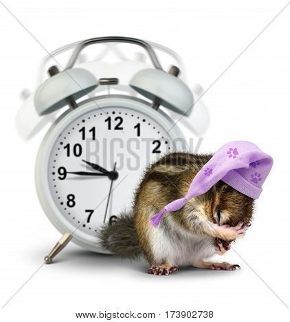 good morning concept Funny animal chipmunk with ringing clock and sleeping hat