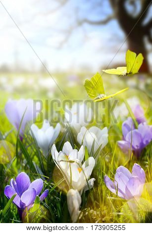 Spring landscape; Blooming flowers and fly butterfly; abstract sunny beautiful Easter nature background