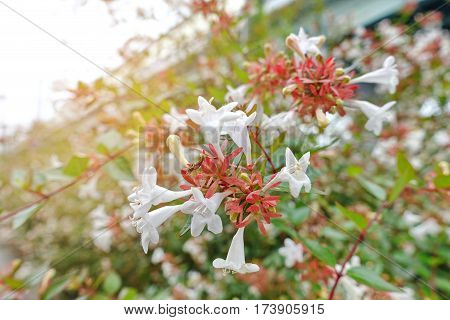 Beautiful Flowers With Red Stripes Orange On White Flowers Wayside .