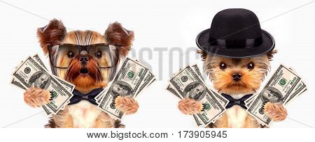 Funny dogs wearing tie and glasses holding bundles of money. Business concept