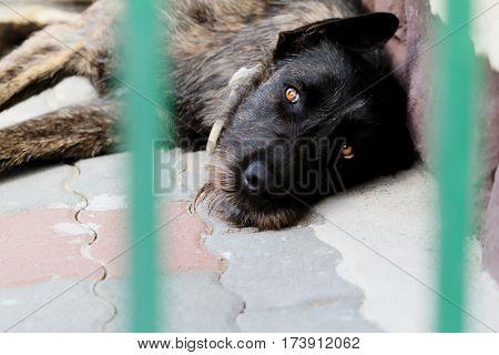 Dog Resting In Stone