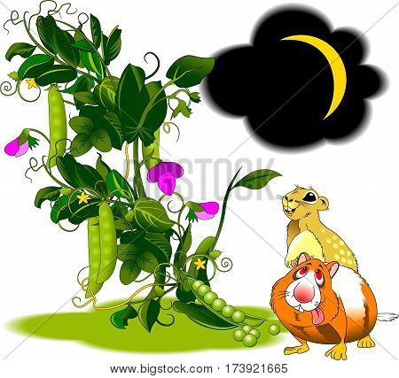 Two cheerful rodent in the pea field and vector illustration