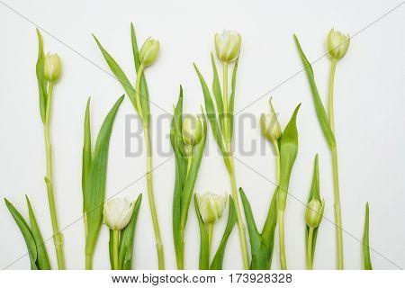Overhead shot of white tulips settled over white flat lay. Creative arrangement of tulips