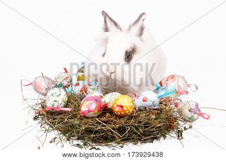 Cute Easter white bunny sitting with nest of colored eggs isolated on white