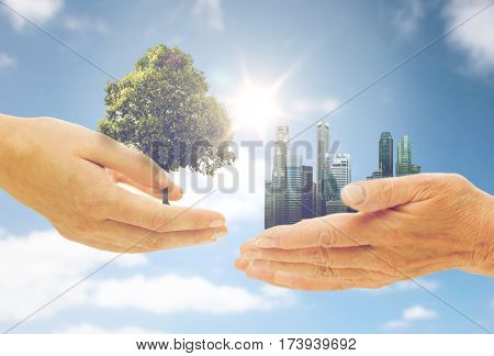 nature, conservation, environment, ecology and people concept - young and senior woman hands holding green oak tree and city buildings over blue sky background