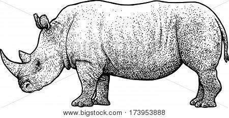 Rhinoceros illustration, drawing, engraving, ink, line art
