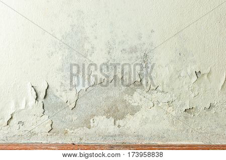 Close up of white wall and Mildewed walls