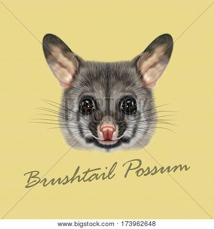 Vector Illustrated portrait of Common brushtail possum. Cute head of wild Australian mammal on tan background.