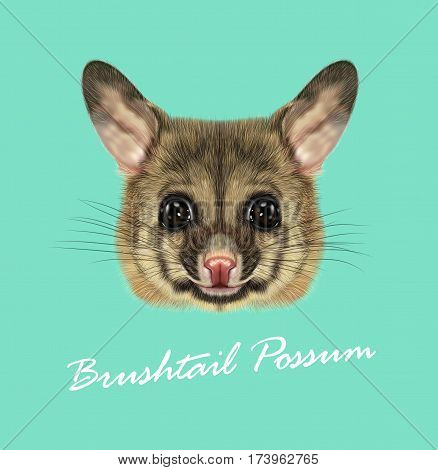 Vector Illustrated portrait of Common brushtail possum. Cute head of wild Australian mammal on blue background.
