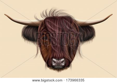 Illustrated portrait of Highland cattle. Cute head of Scottish cattle on beige background.