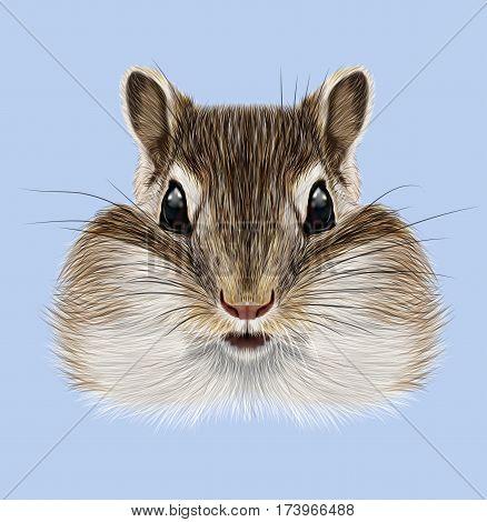 Illustrated portrait of Chipmunk. Cute head of wild mammal on blue background.