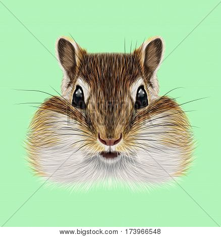 Illustrated portrait of Chipmunk. Cute head of wild mammal on green background.