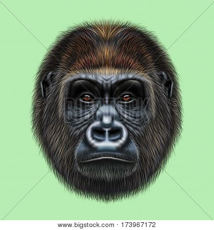 Illustrated portrait of Gorilla male. Cute head of wild ape on green background.