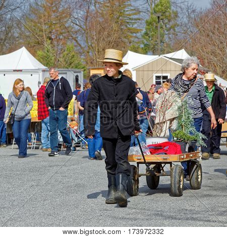 STRASBURG PENNSYLVANIA - February 25 2017: An Amish boy delivers sold items for buyers at the annual spring auction