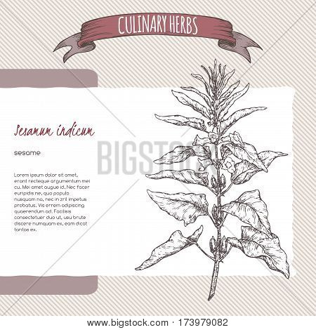 Sesamum indicum aka Sesame vector hand drawn sketch. Culinary herbs collection. Great for cooking, medical, gardening design.