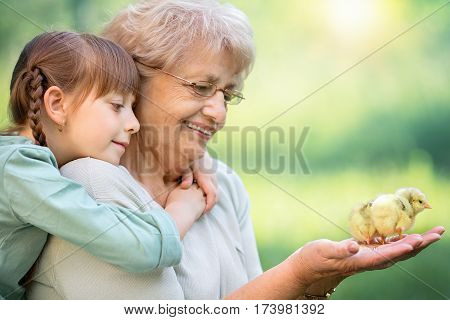 Grandmother with grandaughter are playing with chickens outdoors