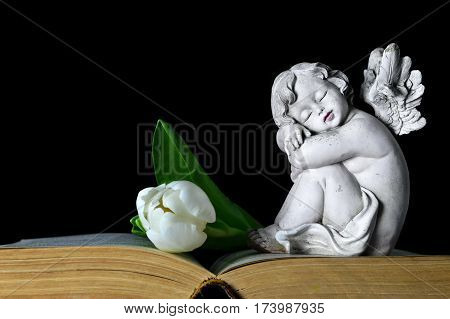 Angel figurine and white tulip on the book, black background