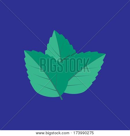 Mint leaves. Plant mint green leaf mint. Mint vector