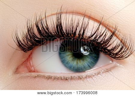 Beautiful Female Eye With Extreme Long Eyelashes, Black Liner Makeup. Perfect Make-up, Long Lashes.