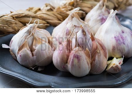 Garlic. Dried French garlic. Red garlic. Violet garlic.Garlic background. Bulbs on grey tin plate.