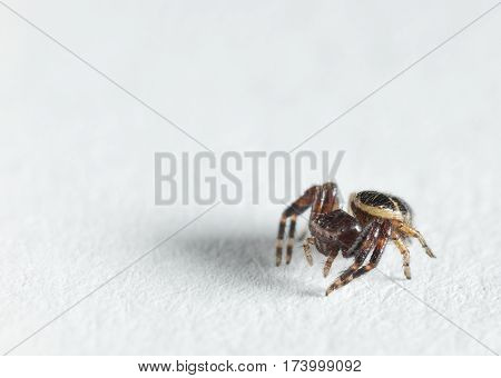 Small Spider On Paper