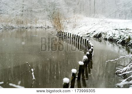 Snow Covered Shore In A Forest